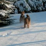 Linn und Cleo im Schnee
