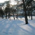 Baumwiese im Schnee