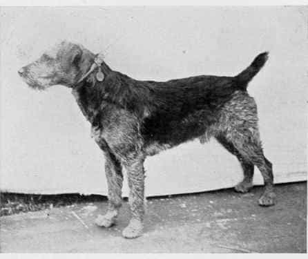 Airedale-History1