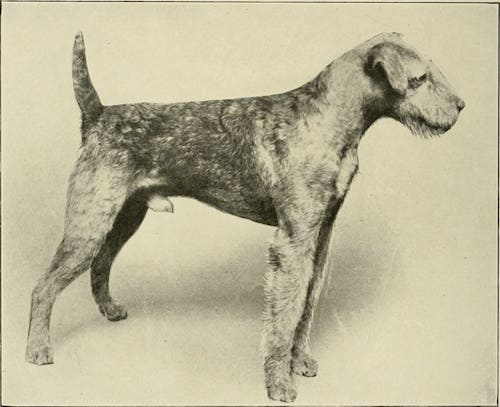 Airedale-History2