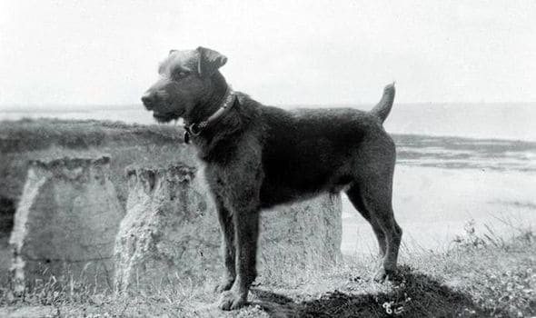 Airedale-History10