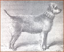 Airedale-History3