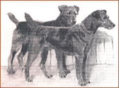 Airedale-History4