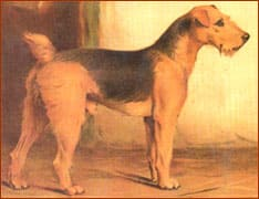 Airedale-History6