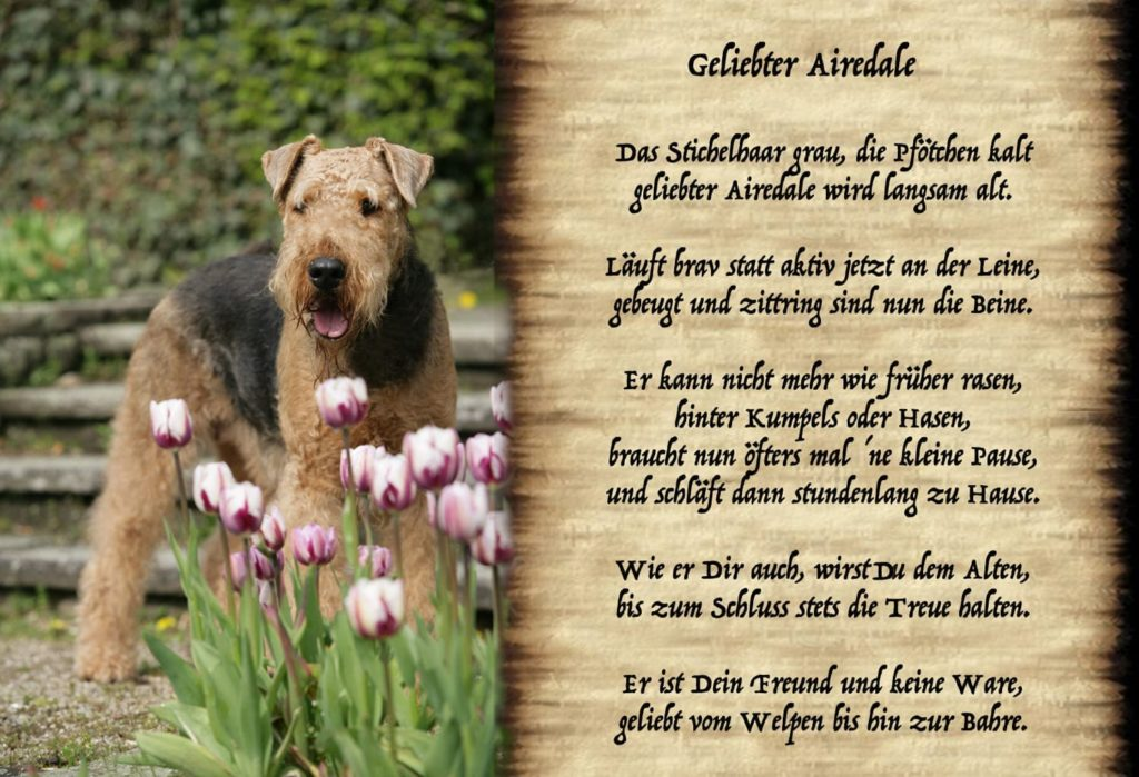 Geliebter Airedale
