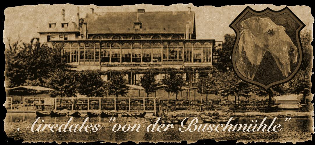 """Airedale-Terrier Zwinger """"von der Buschmühle"""""""